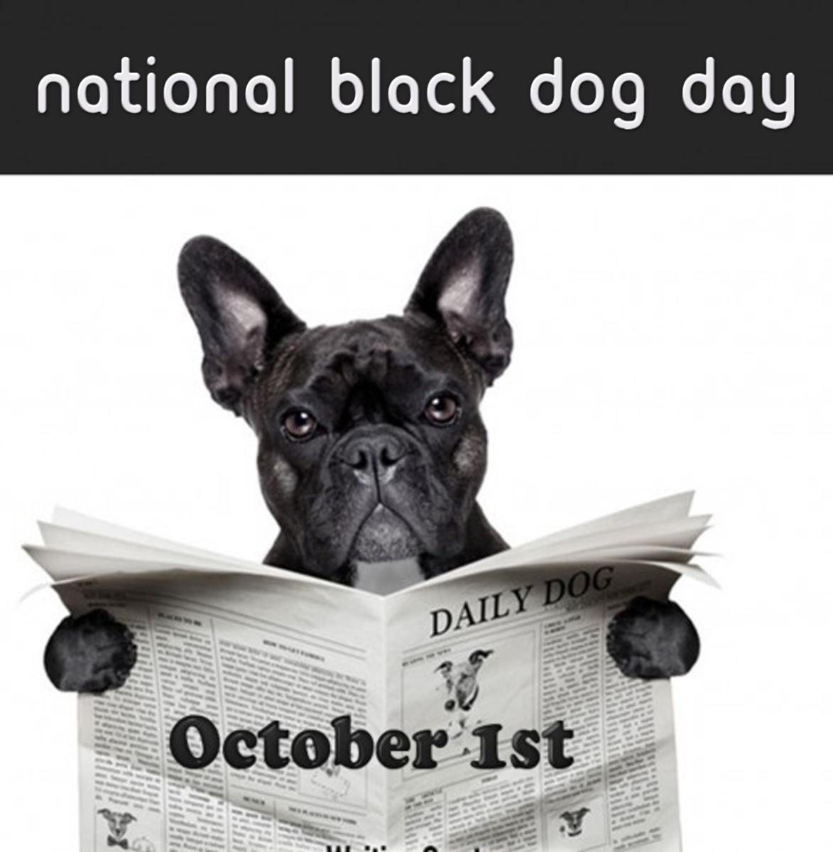 black-dog-day-celebration