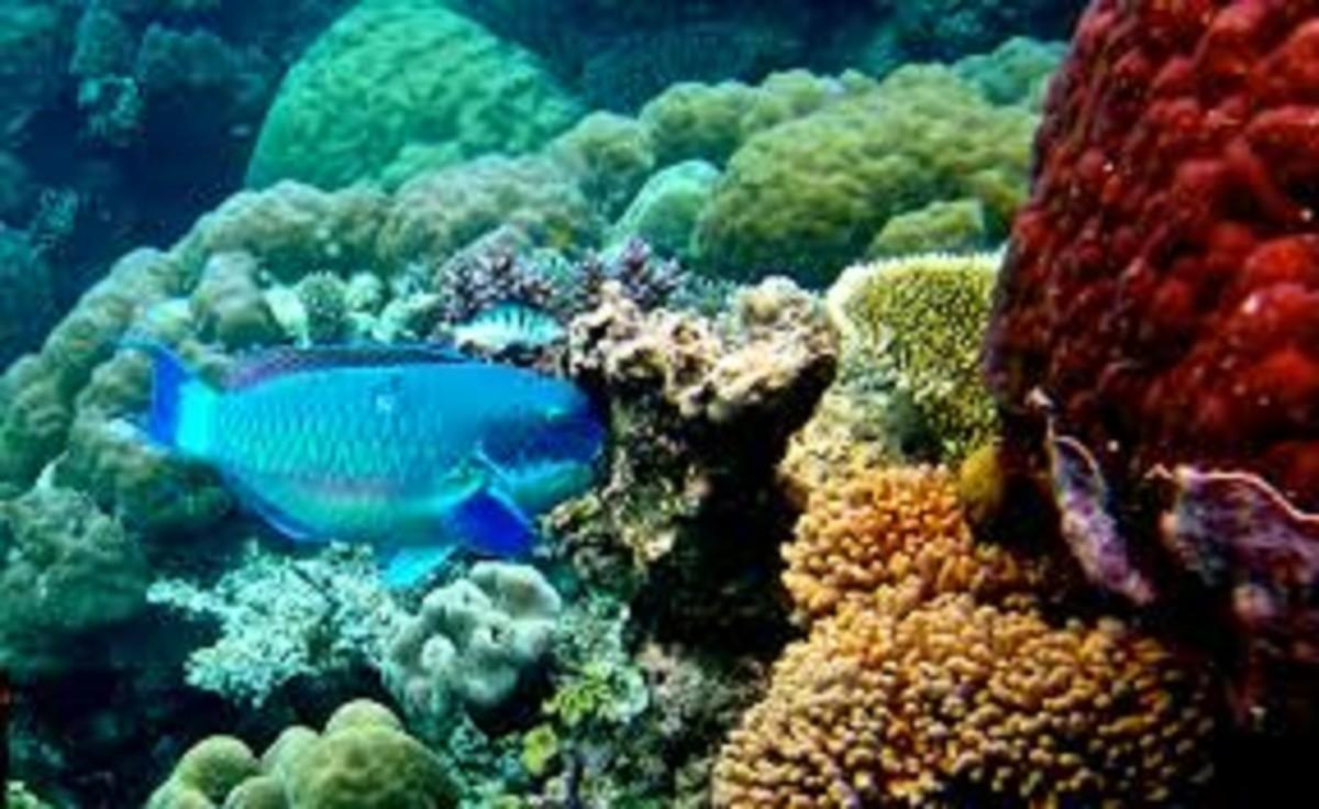 oceans-and-deep-seas