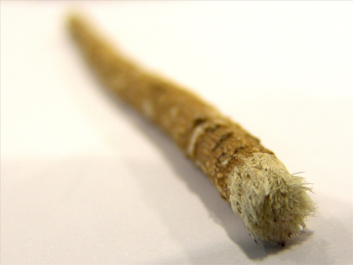 Chew sticks, thought to be the first toothbrush, used by the Egyptians, these have been found in Egyptian tombs.