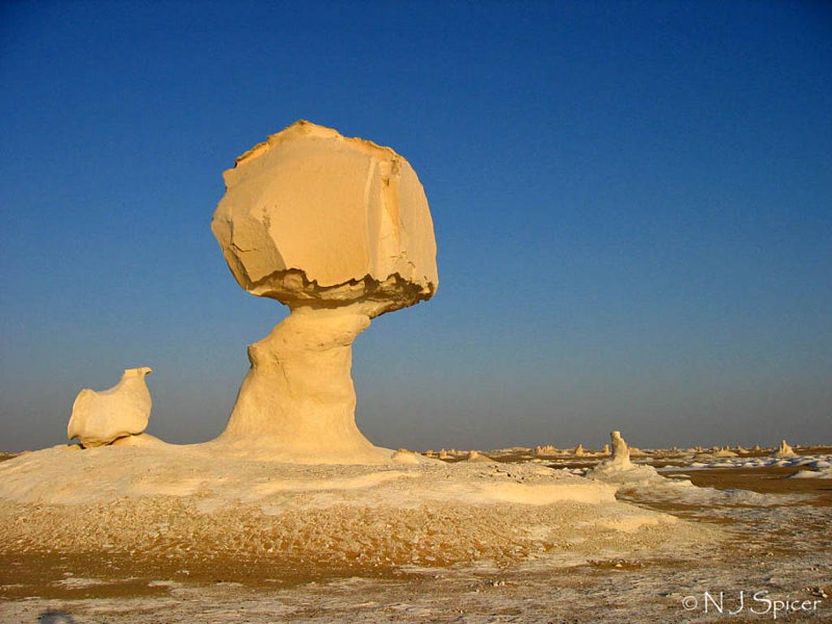 Impressively carved mushrooms.