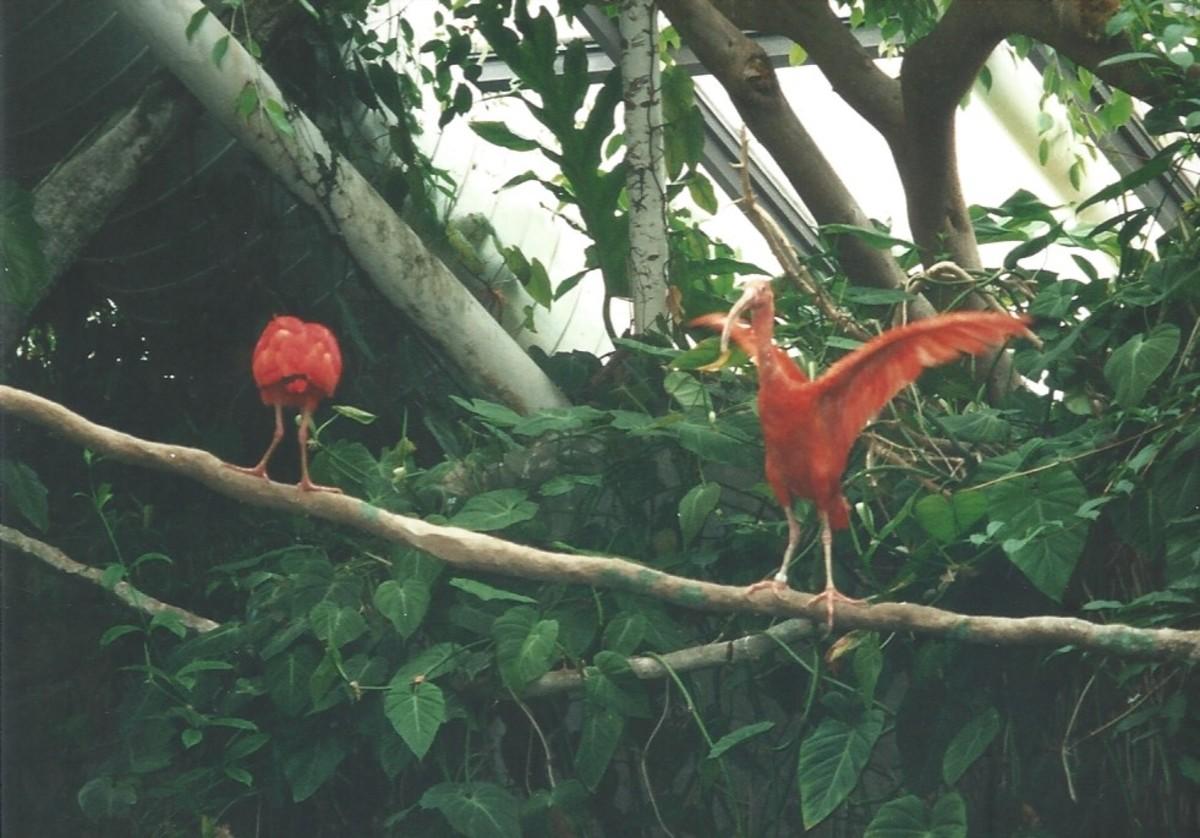 Birds at the National Aquarium's Tropical Rainforest exhibit