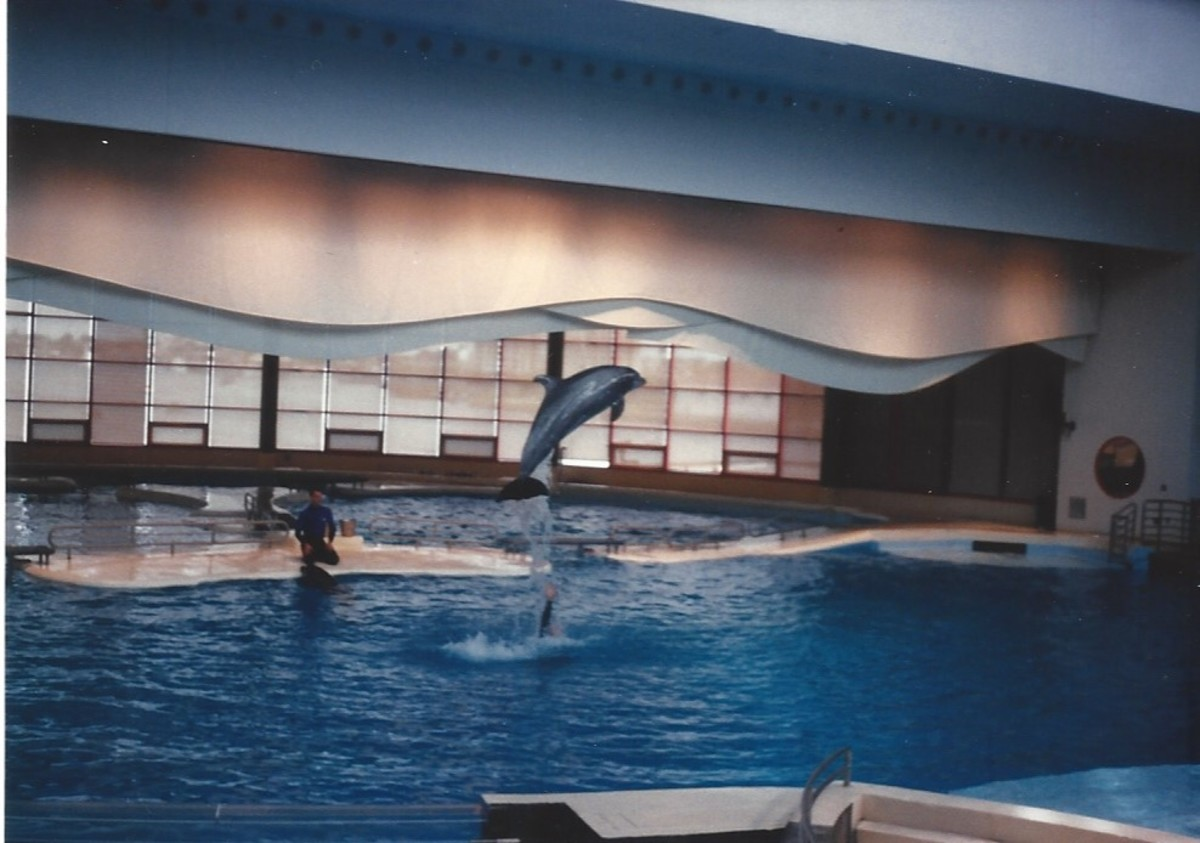 A dolphin makes a jump during the dolphin show.  The National Aquarium now gives shows rather than demonstrations.  Thee demonstrations lack the acrobatics of the shows of yesteryear.