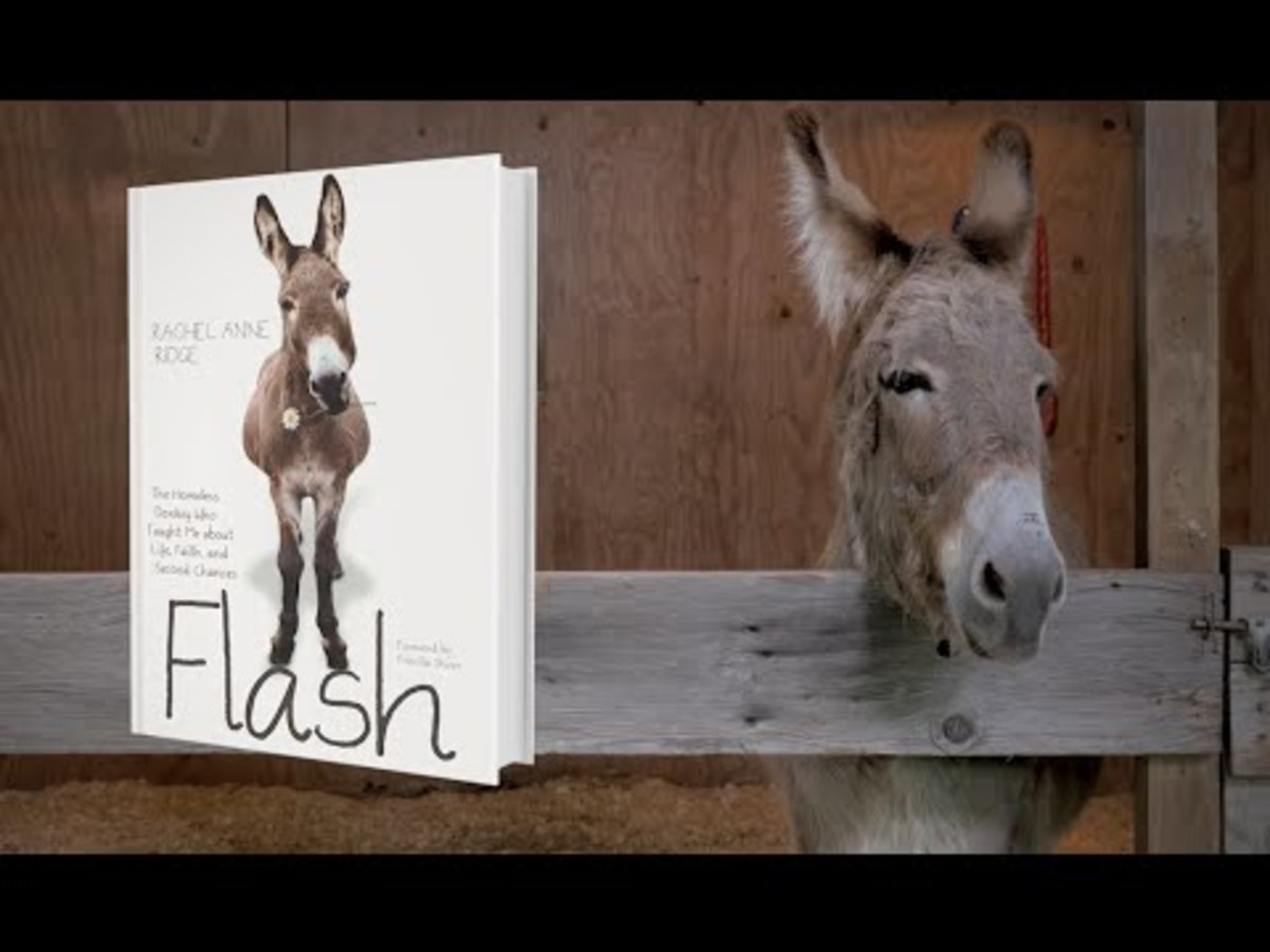 Flash and his book