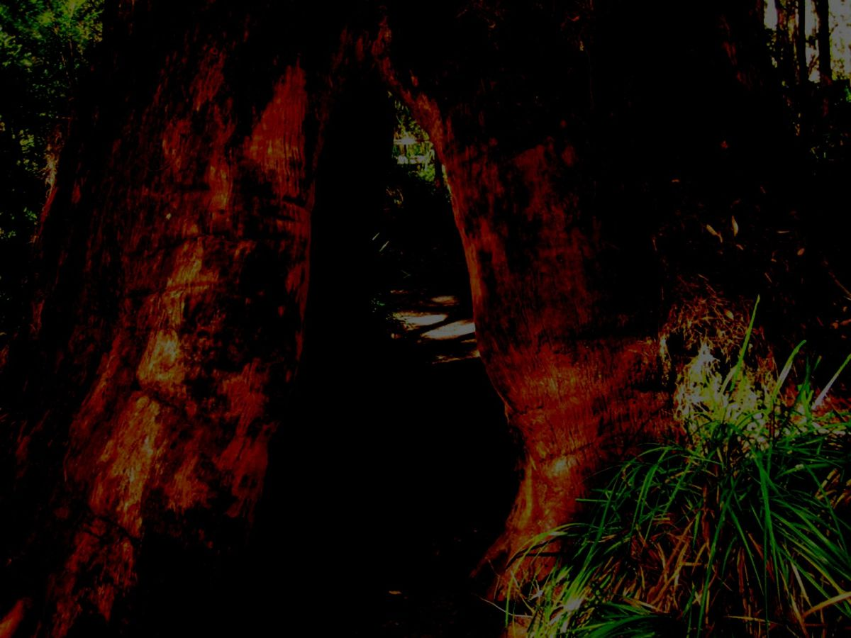 Hollow tree