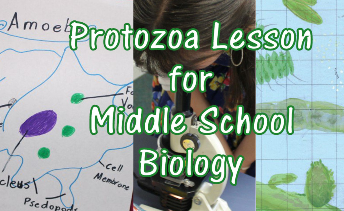 Protozoa and Bacteria Lesson for Middle School Biology