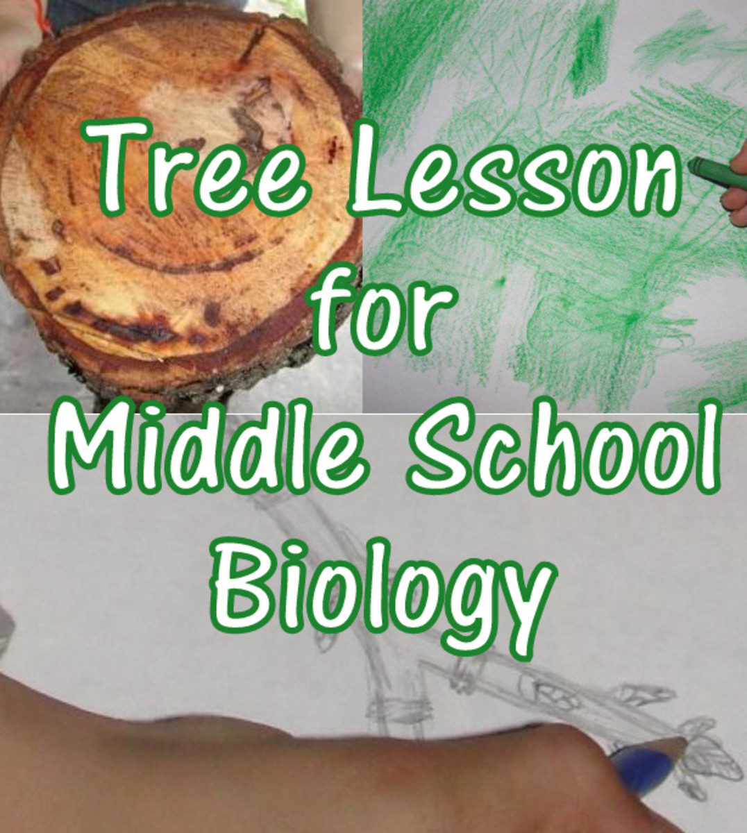 Tree Lesson for Middle School Biology