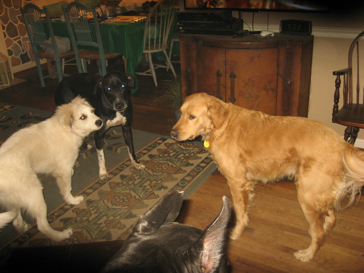 Our four dogs.
