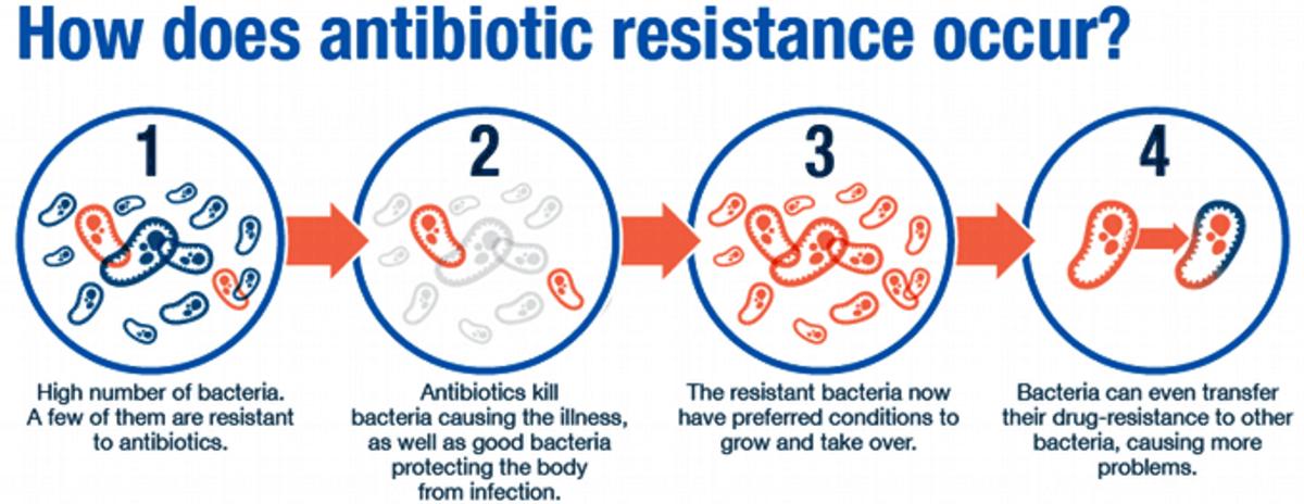 Pic: How antibiotic resistance occurs