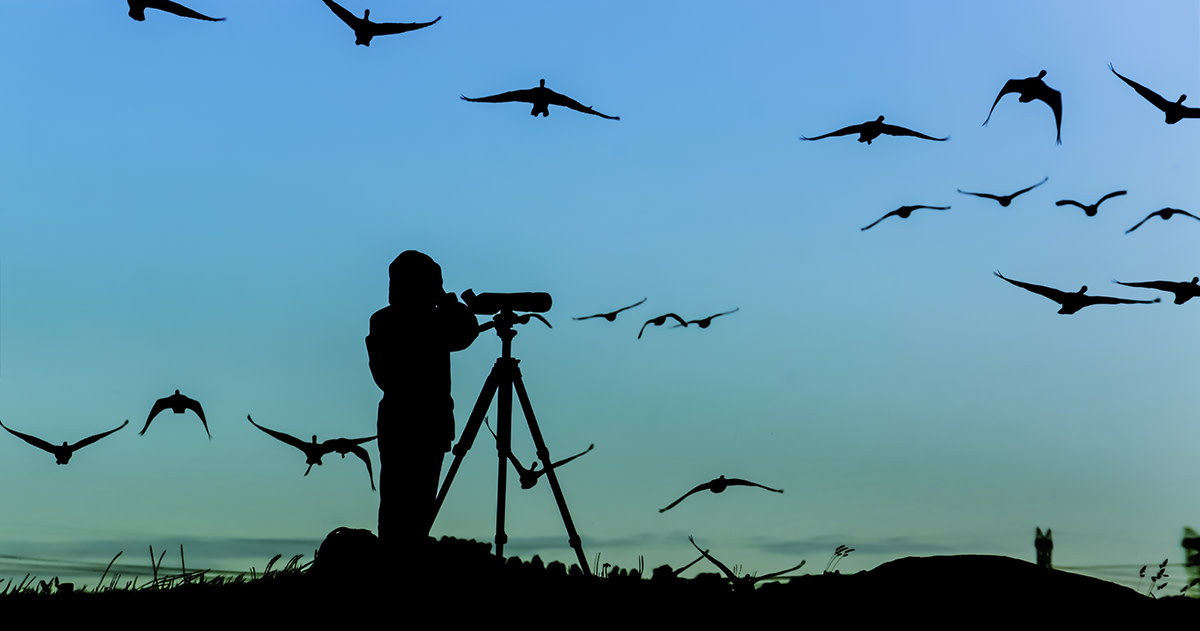 How to Pitch Editors at Bird Watching Magazines