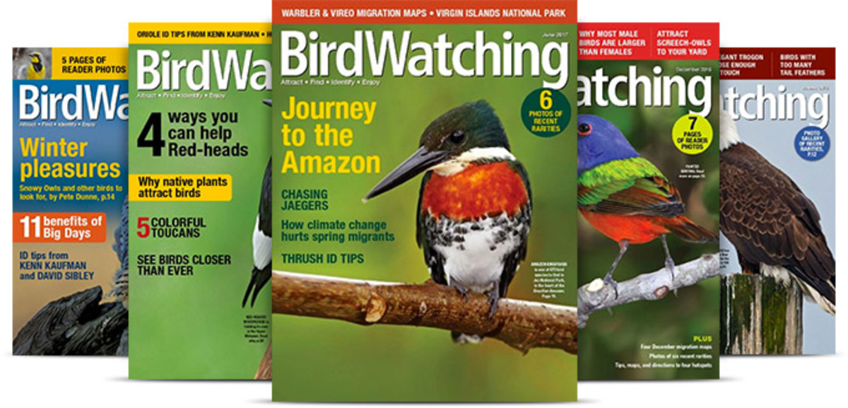 how-to-pitch-editors-at-bird-watching-magazines