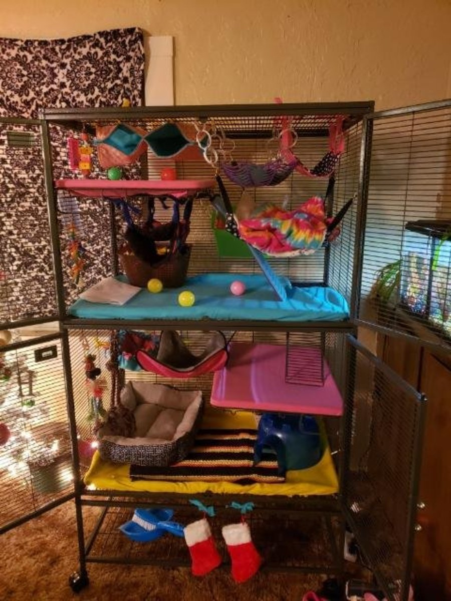 This is my double critter nation cage. The bar spacing is 1/2 inch, the levels are all smooth plastic, and it is really secure. This is definitely the nicest cage I have ever had and it would be a great cage for new rat owners.