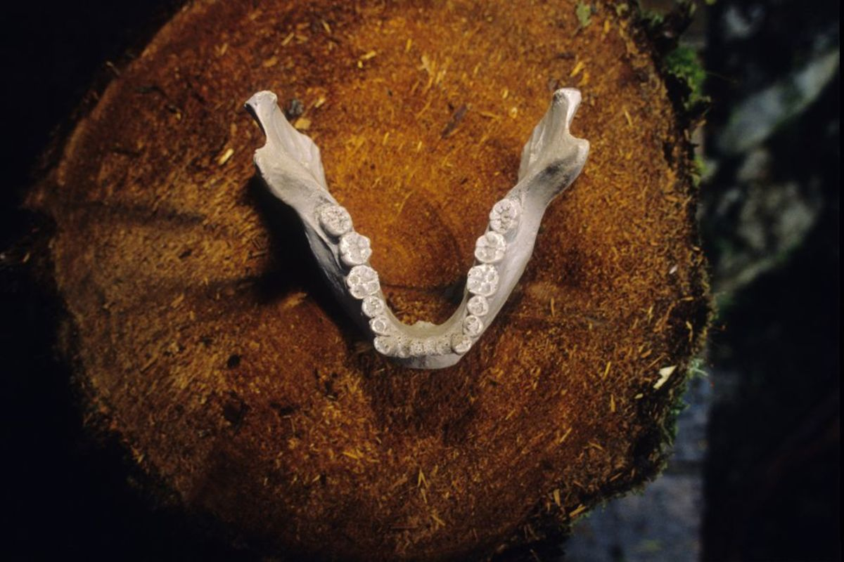 Cast of mandible found in cave