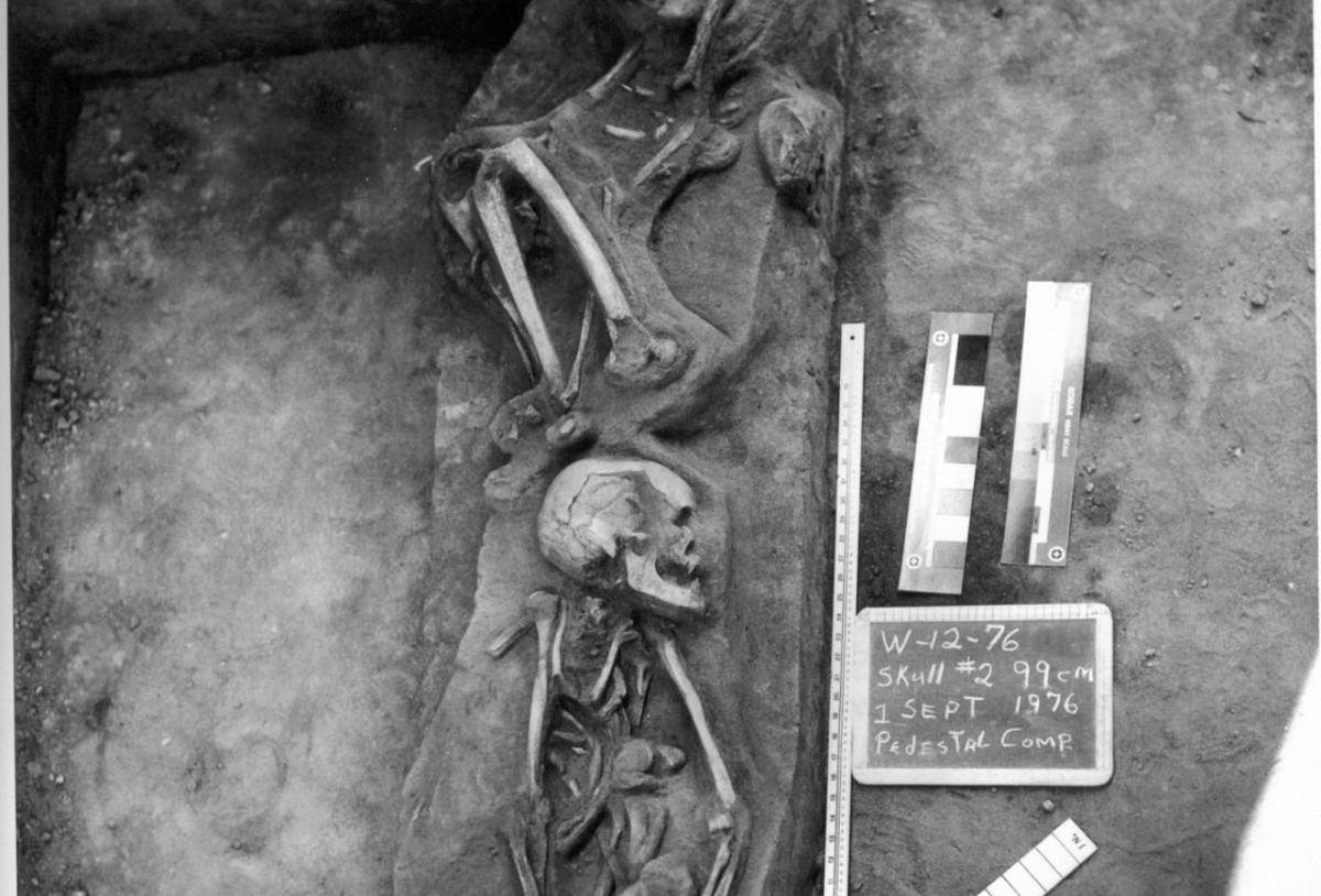La Jolla Skeletons - Baja, California