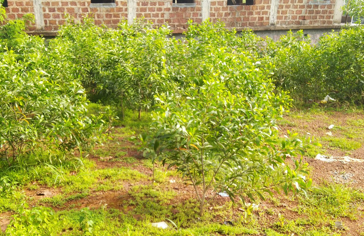 Next generation seedlings coming up in hundreds of numbers