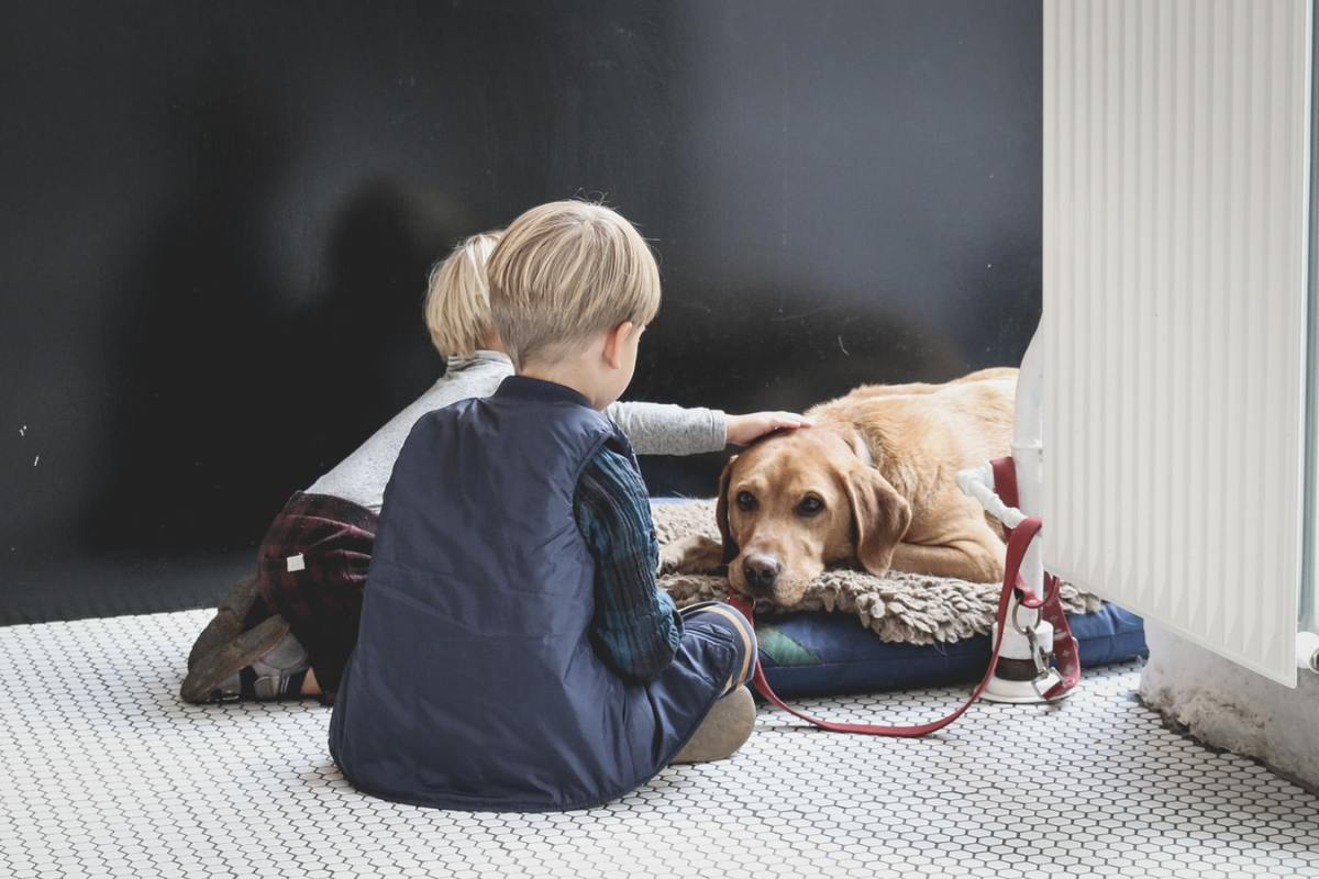 The 10 Most Suitable Dog Breeds for Families With Kids