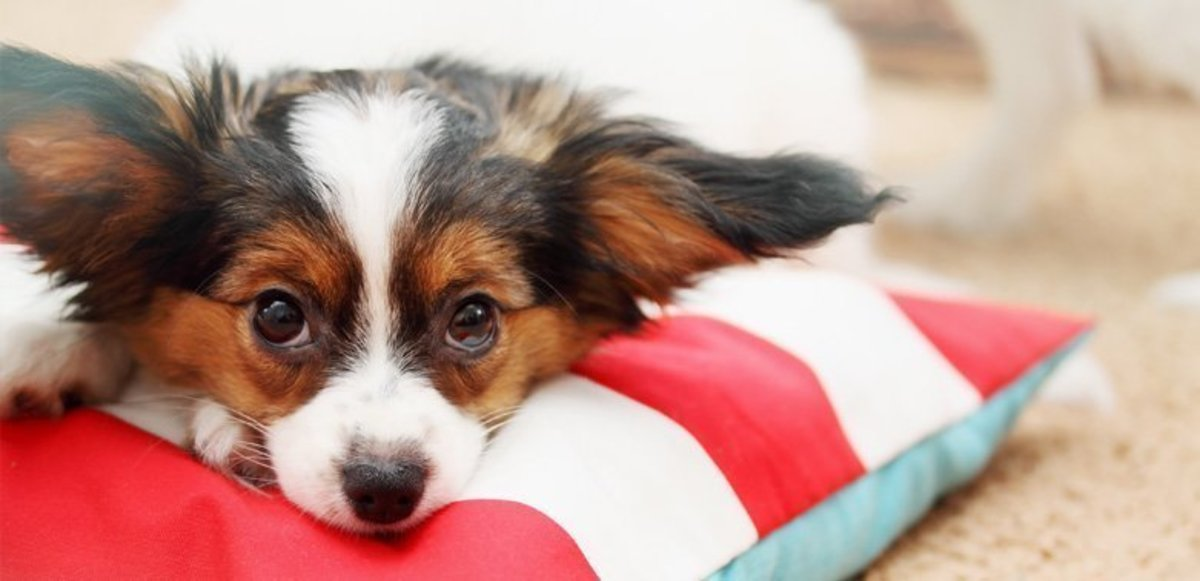why-should-you-hire-a-dog-trainer