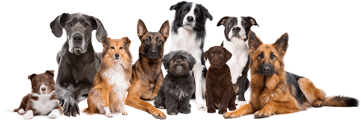 Why Should You Hire a Dog Trainer?