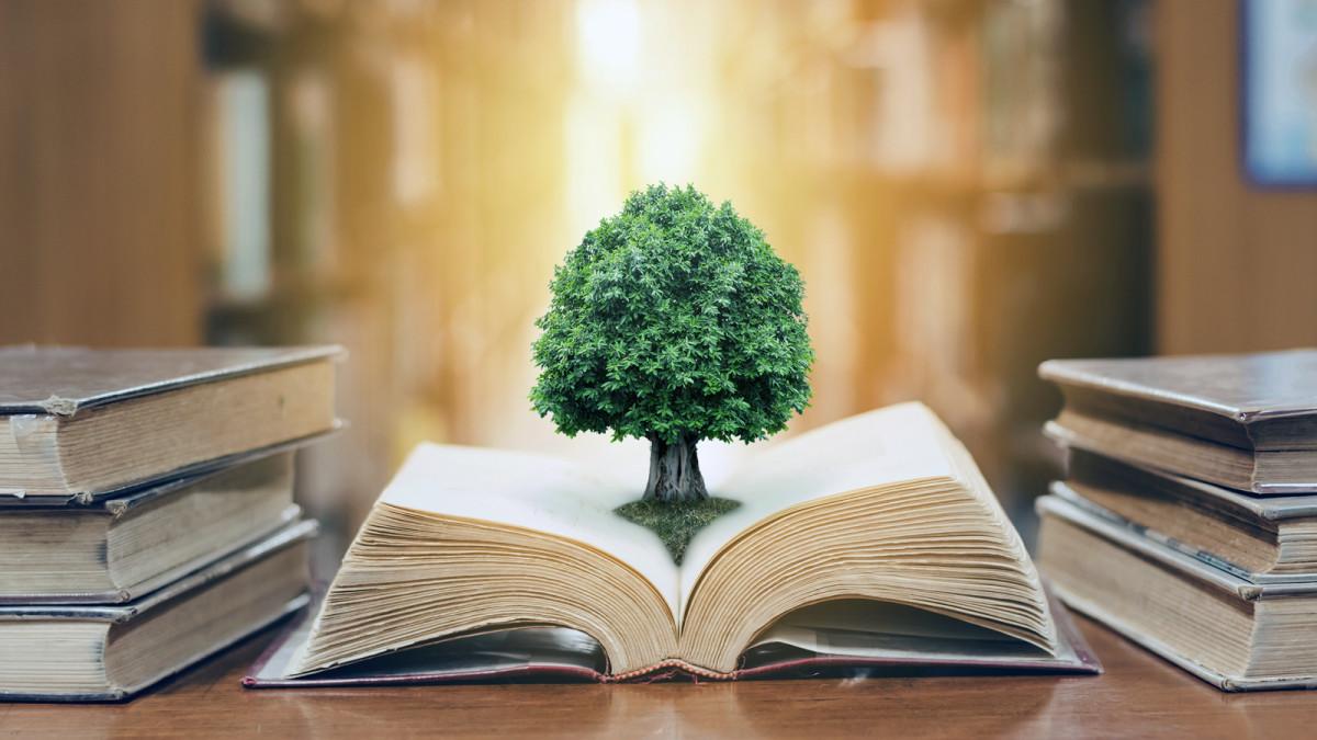 distinguishing-between-knowledge-intelligence-and-wisdom