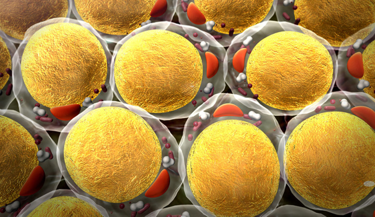 Fat cells are a mixture of triglycerides and water, in no particular ratio