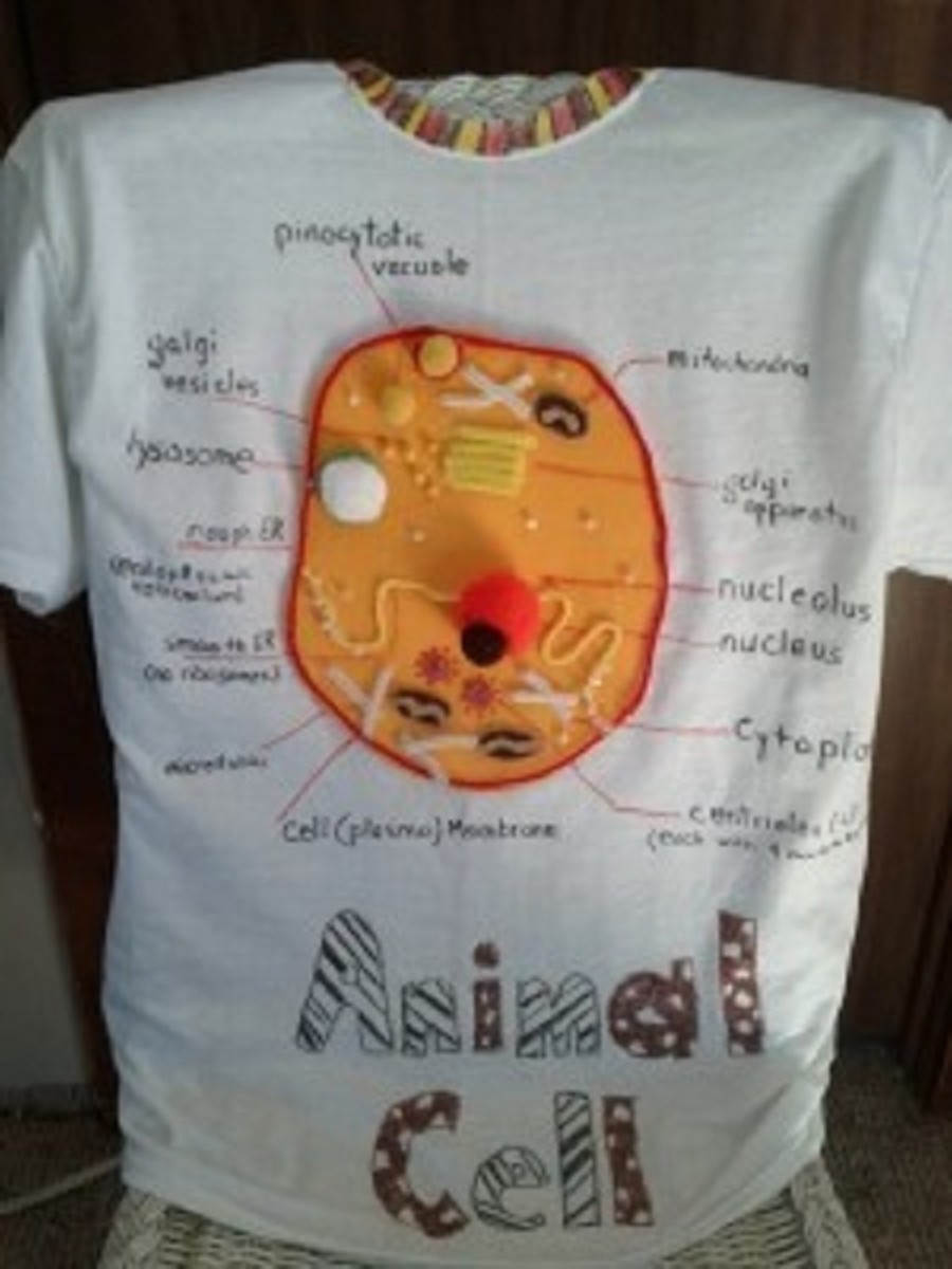Animal Cell T-Shirt: Wear Your Biology Project to School