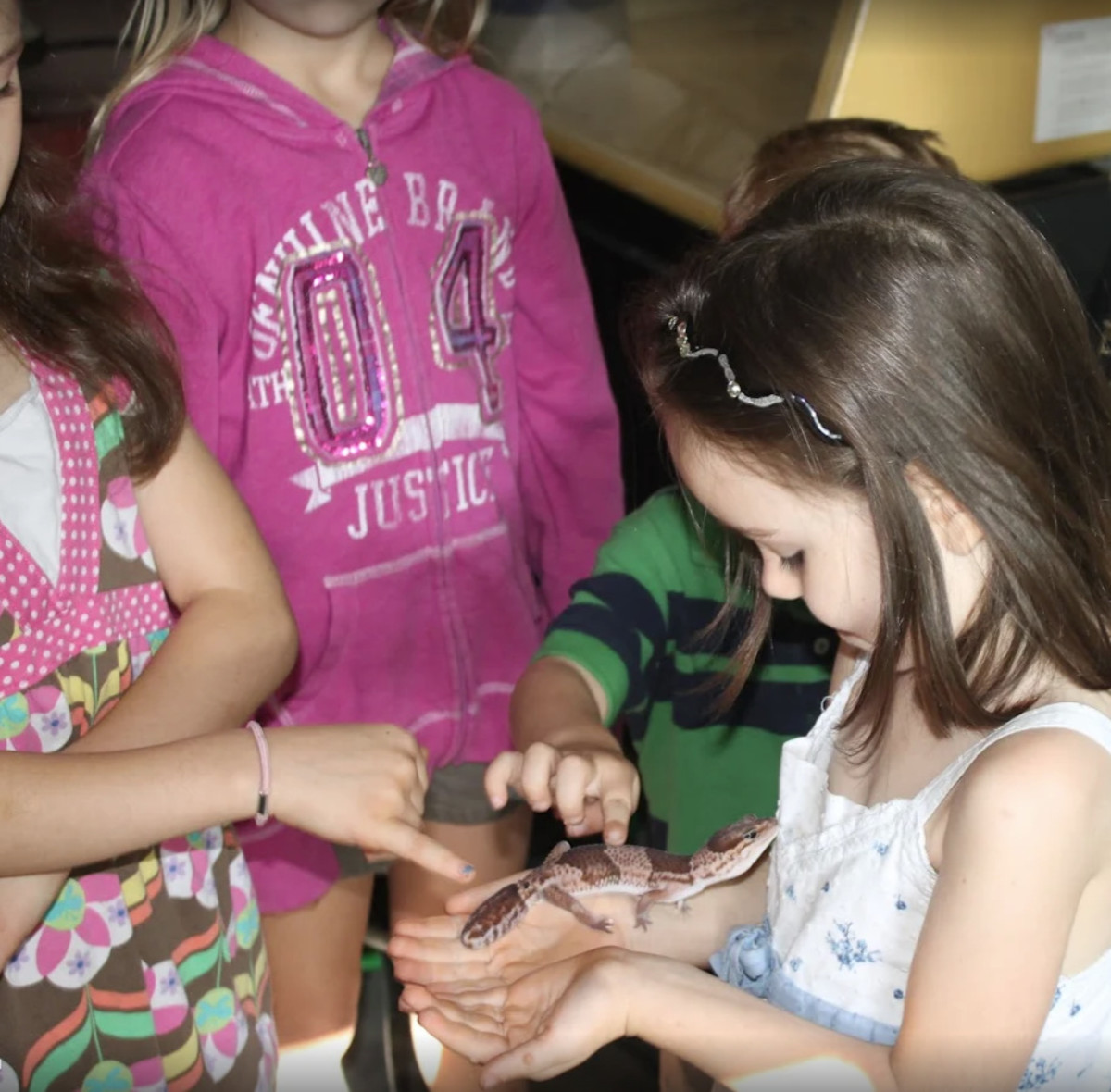 Learning about animals at Rainbow Bird Land Pet Center