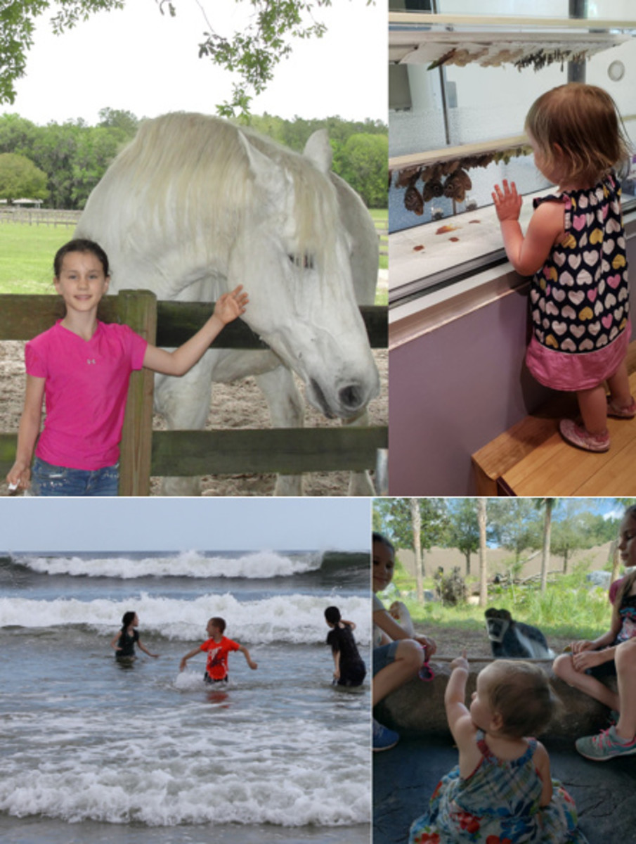 Mill Creek Farm & Museum of Natural History in Gainesville and our two favorite places in Jacksonville: the beach & the zoo