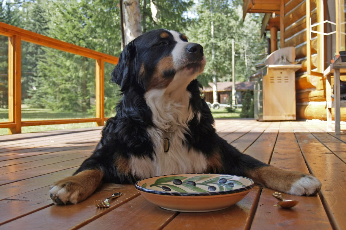 how-to-buy-dog-food-online