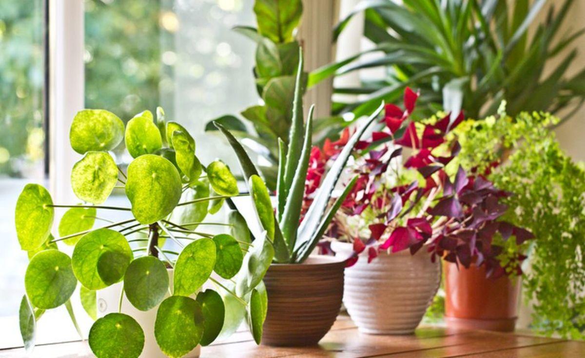 Vastu for Plants