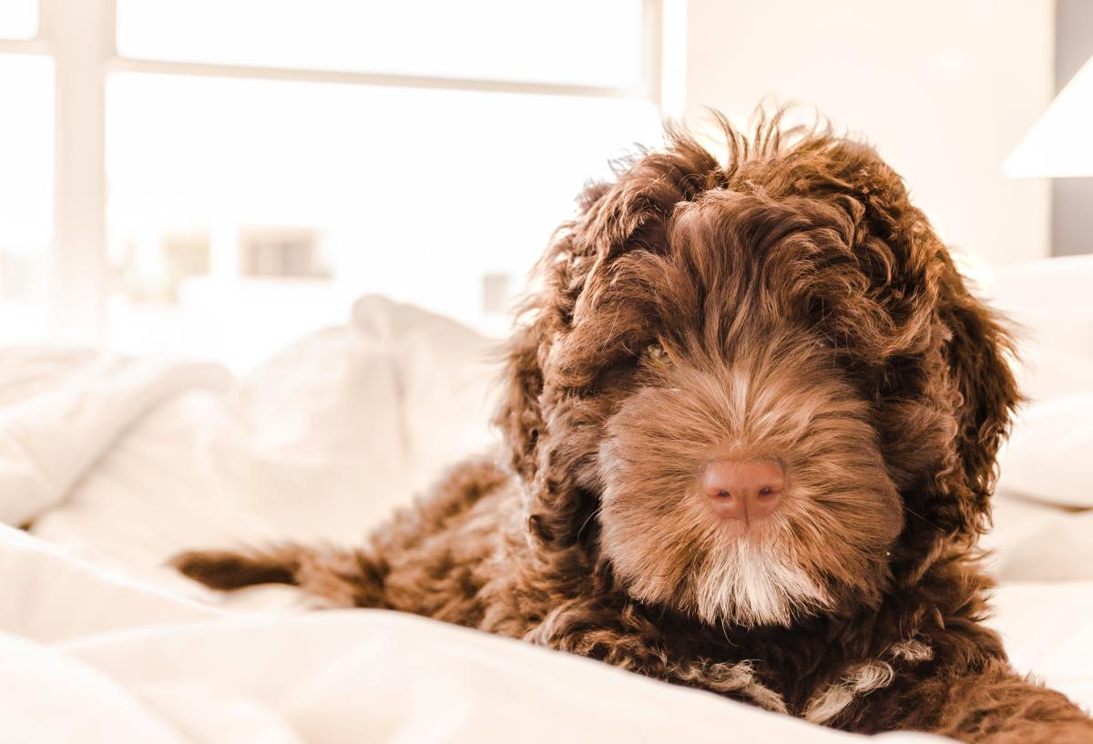 How to Keep a Clean Home With Dogs - 5 Tips