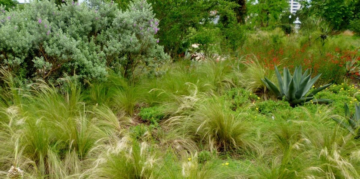 Arid Garden at McGovern Centennial Garden