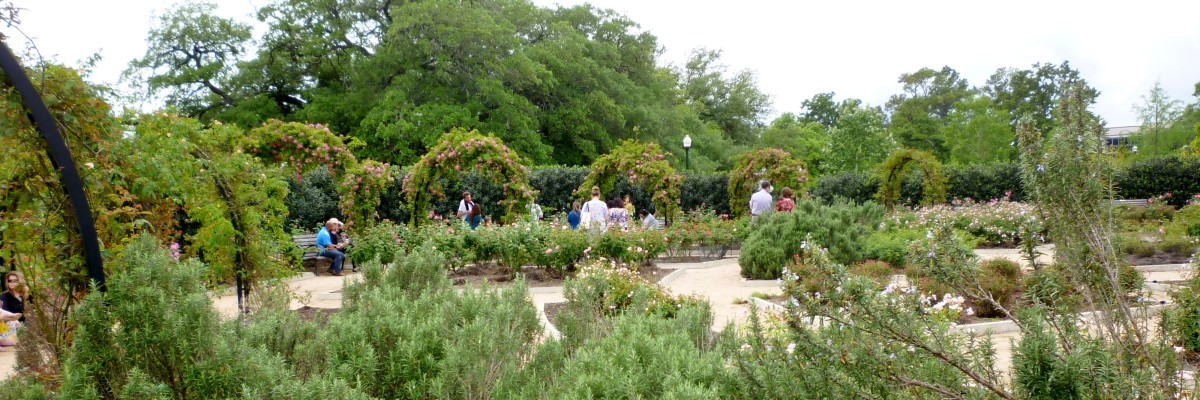 View of the rose garden