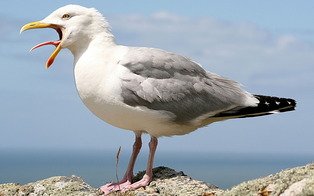 the-parable-of-the-seagull-or-why-honest-works