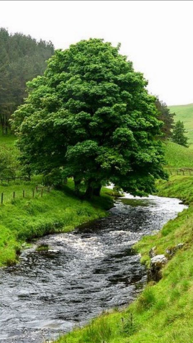 Tree planted by rivers of water