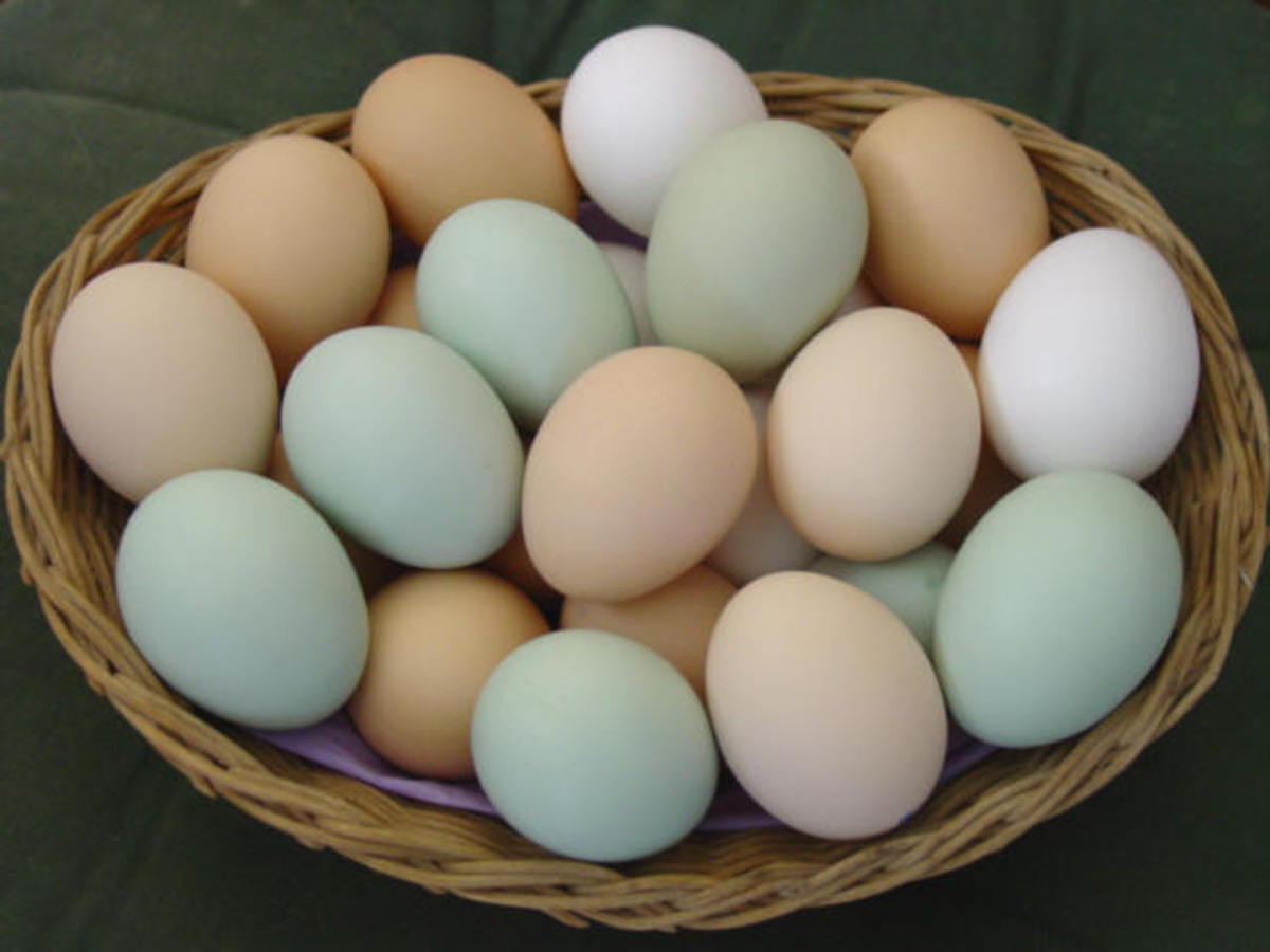 Incredible, Edible Eggs