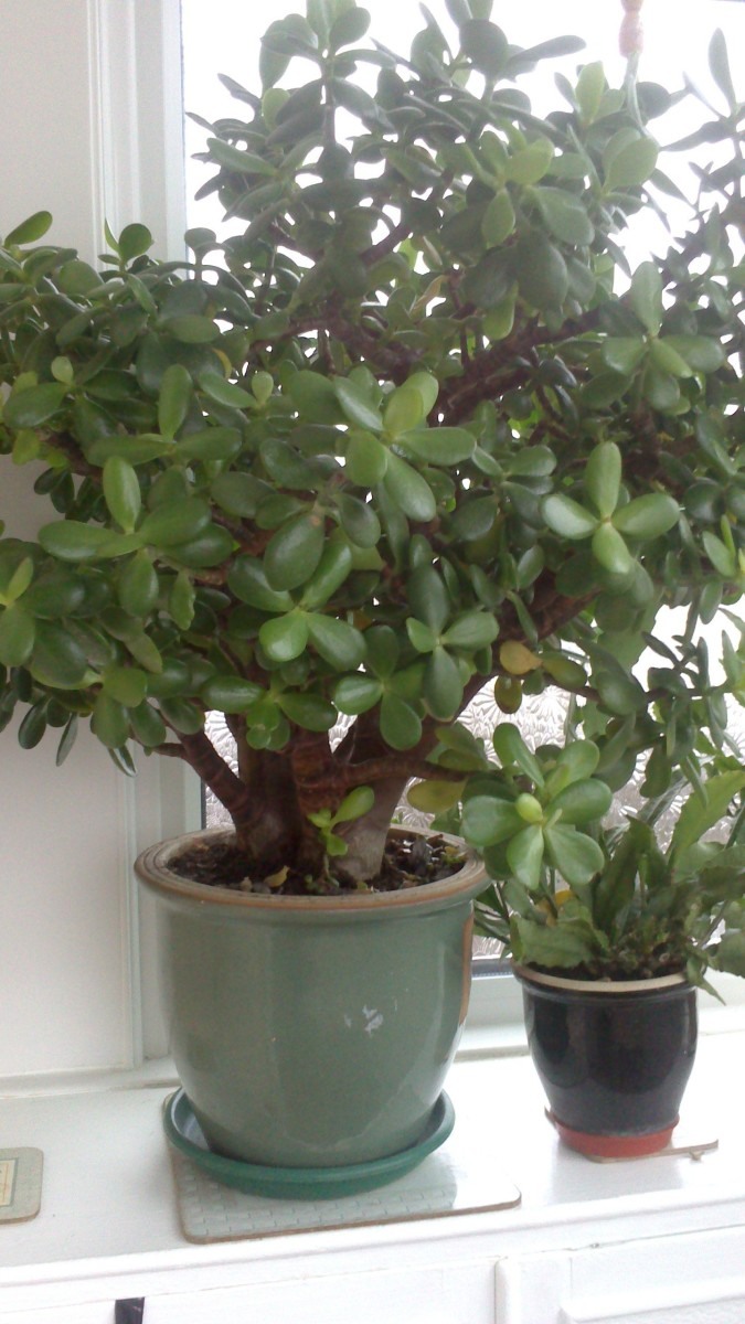 The money tree got bigger with orchid cactus. This is how it looks like now.