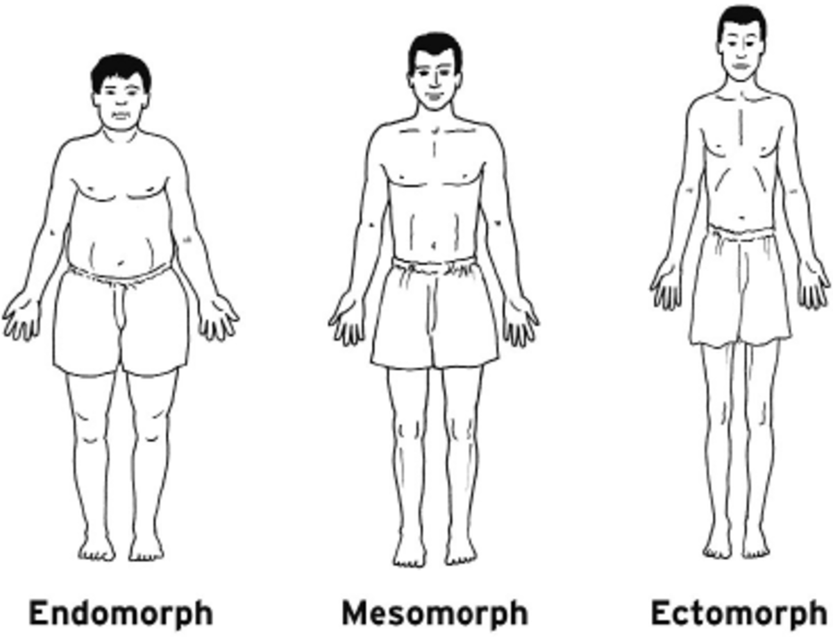 The Three Body Types - Ectomorph, Mesomorph and Endomorph