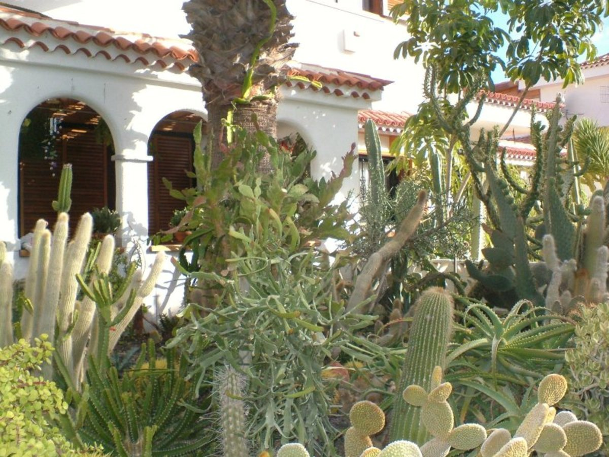 Cactus garden in Tenerife Photo by Steve Andrews