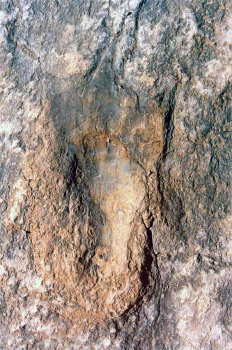 creationist-anti-evolution-fraud-exposed-at-dinosaur-valley-texas