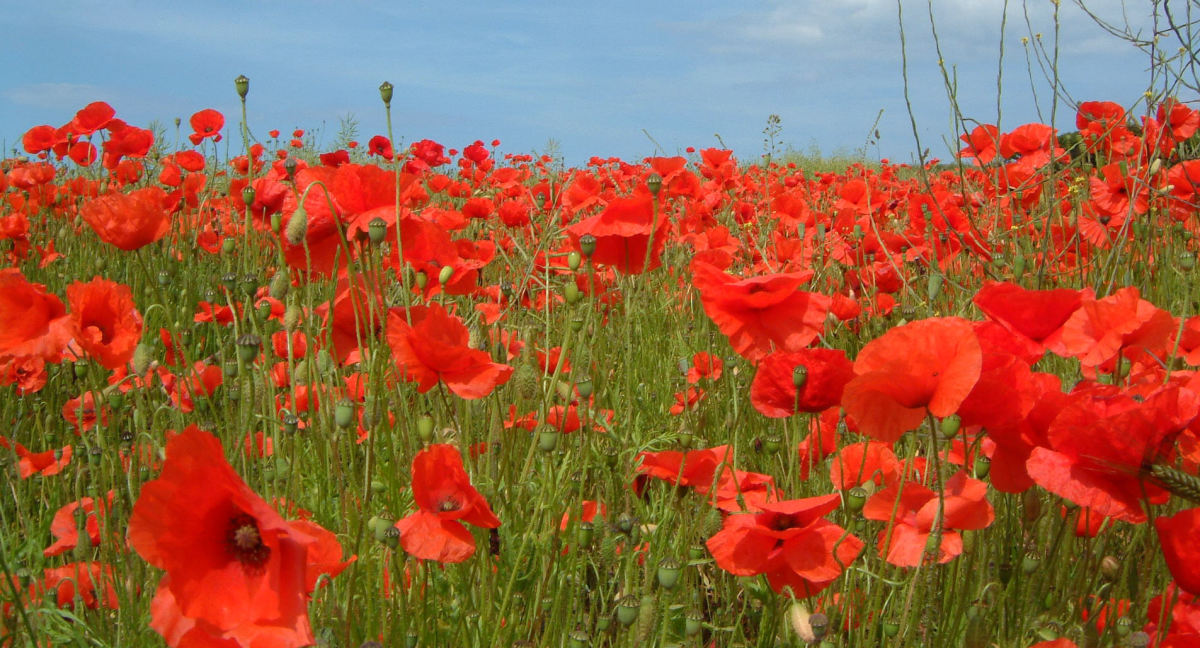 impact of war on poetry Poems about the first world war have defined the genre for decades  to  appreciate in even more varied and detailed ways the effects of war.