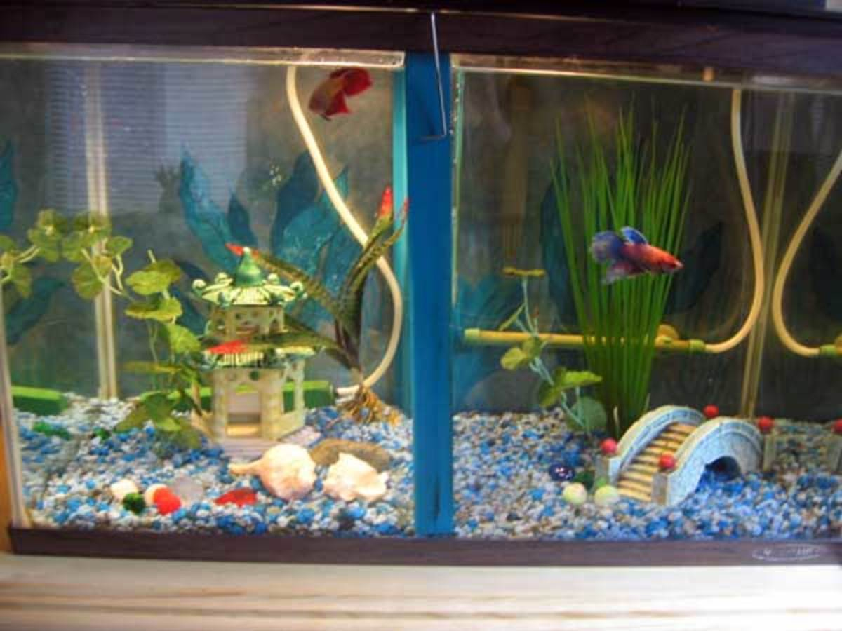 How to make a divided tank for betta fish hubpages for Betta fish tank size