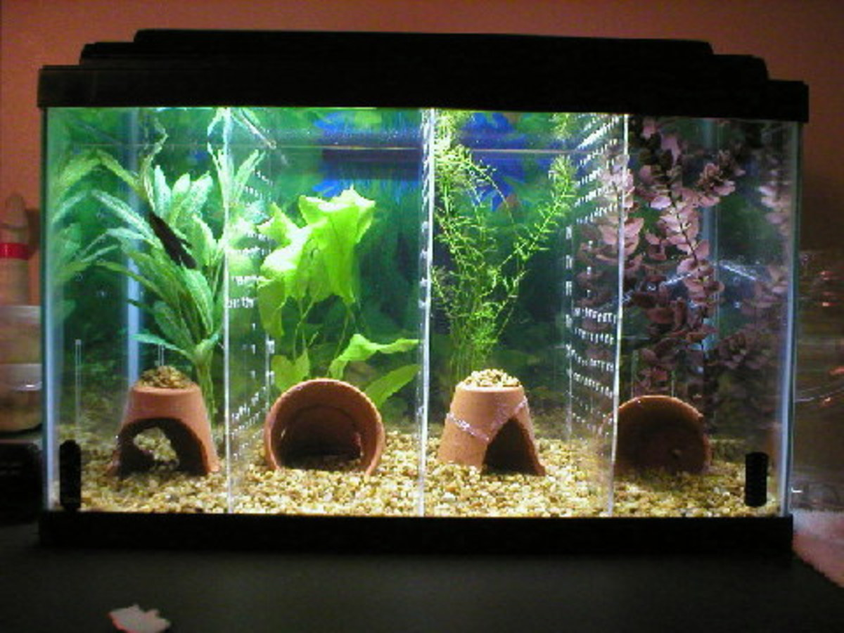 How to make a divided tank for betta fish for Divided fish tank