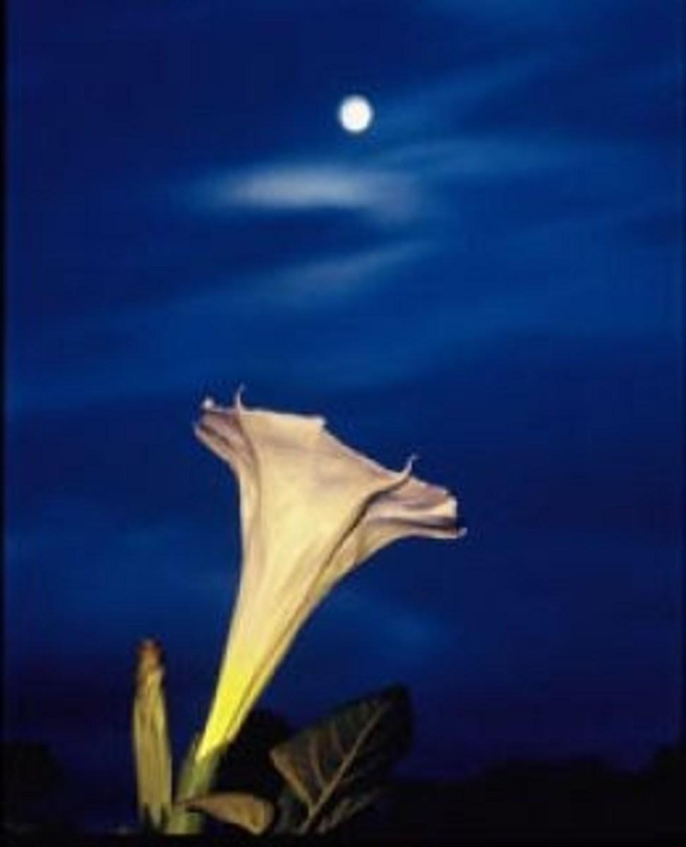 moon-garden-landscaping