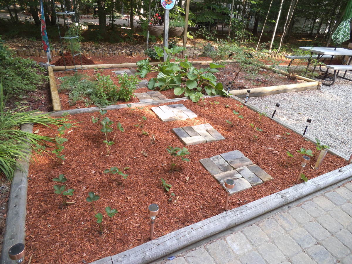 My bed is raised (single landscape rail) and with stepping stones so I can easily pick the berries. I've mulched with red shredded mulch.
