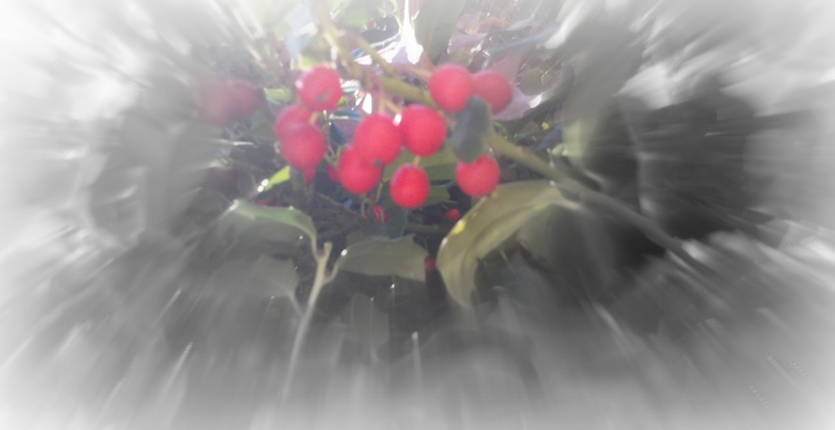 Berries with color focal