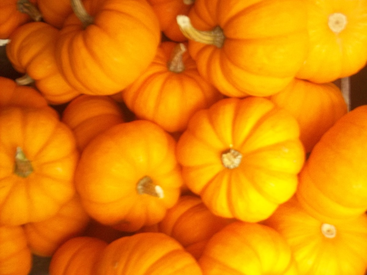 Orange tiny pumpkins