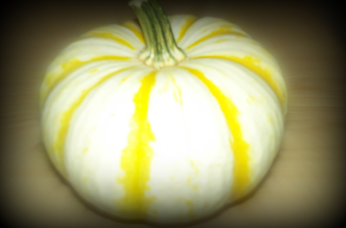 White and yellow pumpkin - dark edges