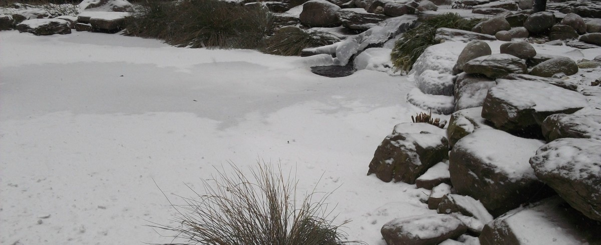 Cropped winter pond photo