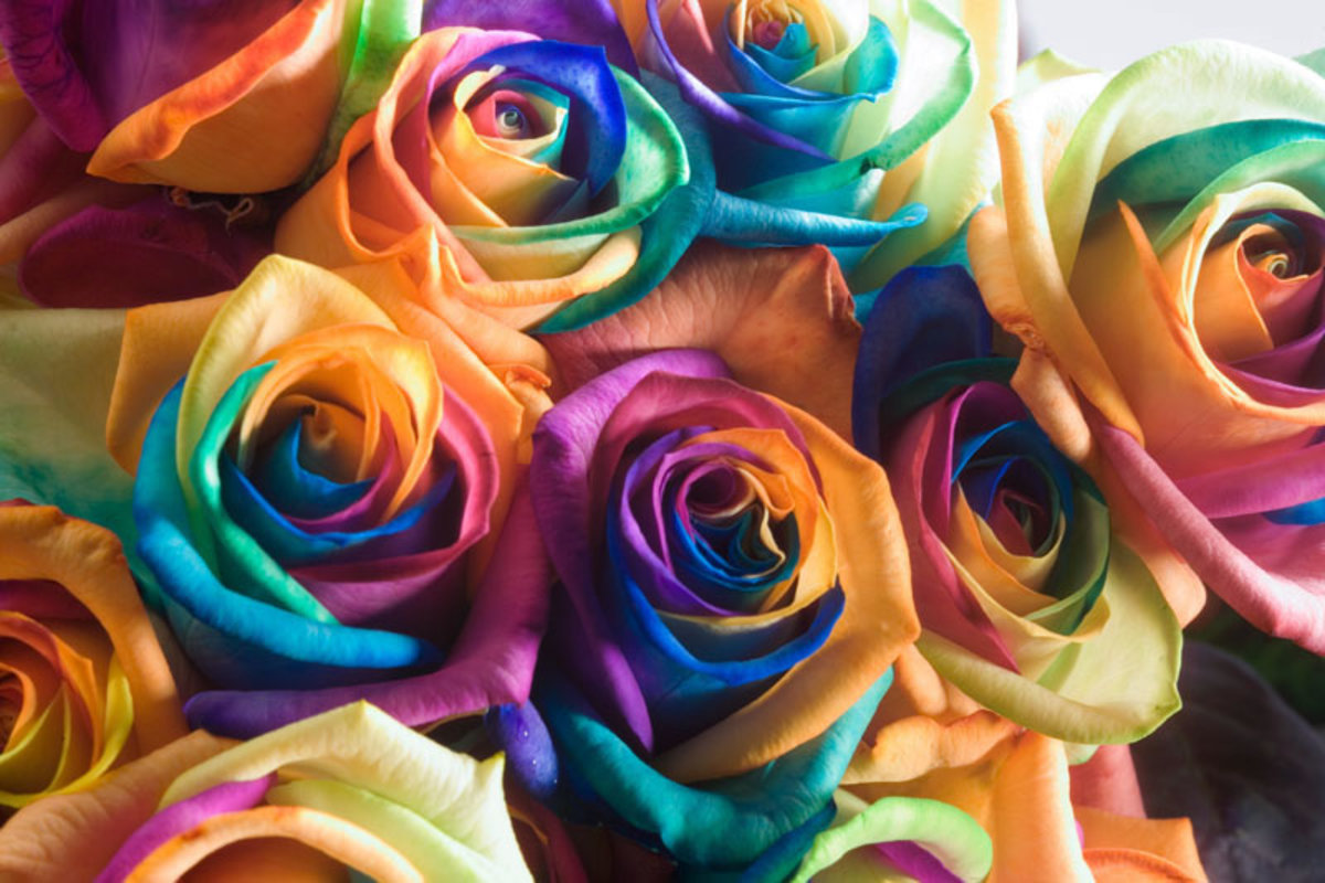 Rainbow Roses gift meaning