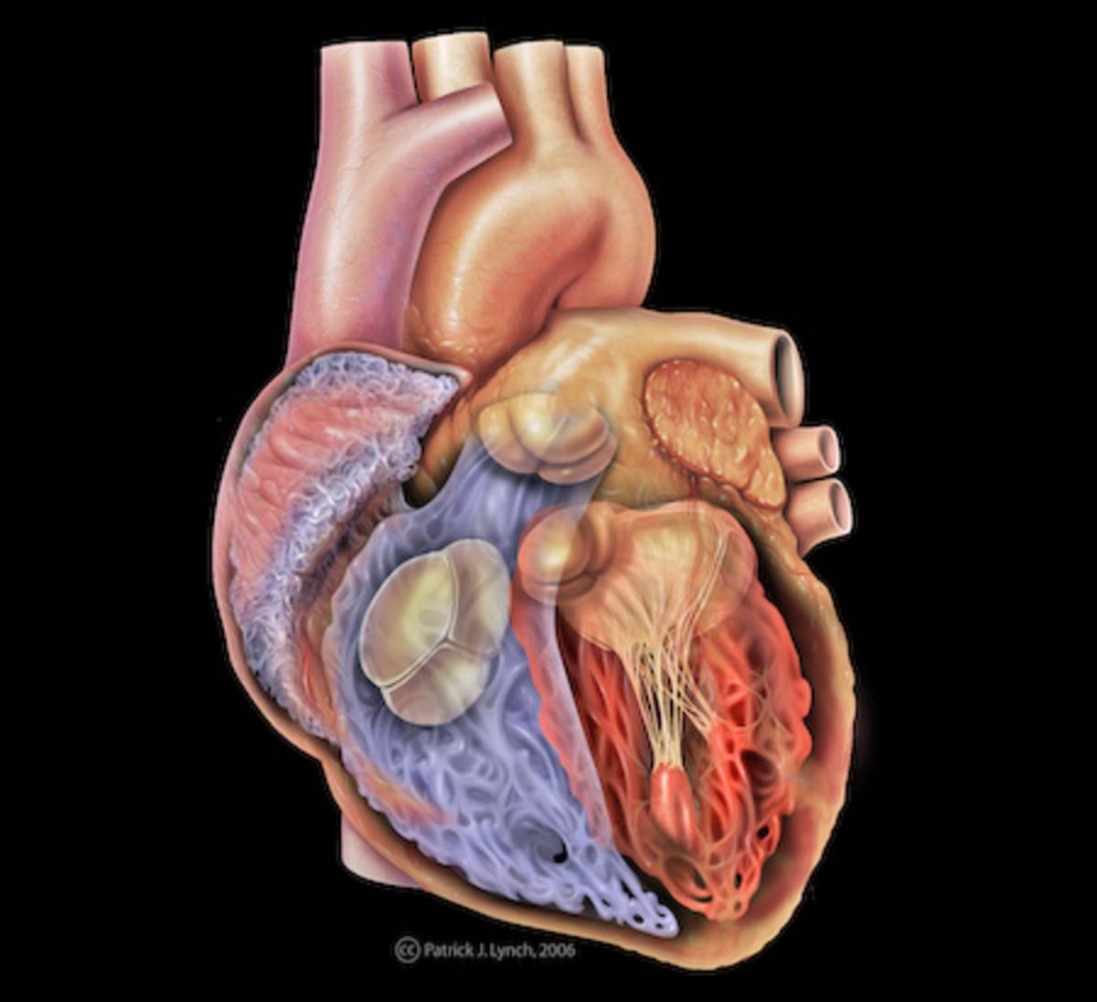 Dr Sinatra's Top Ten Nutritional Supplements for Women's Heart Health