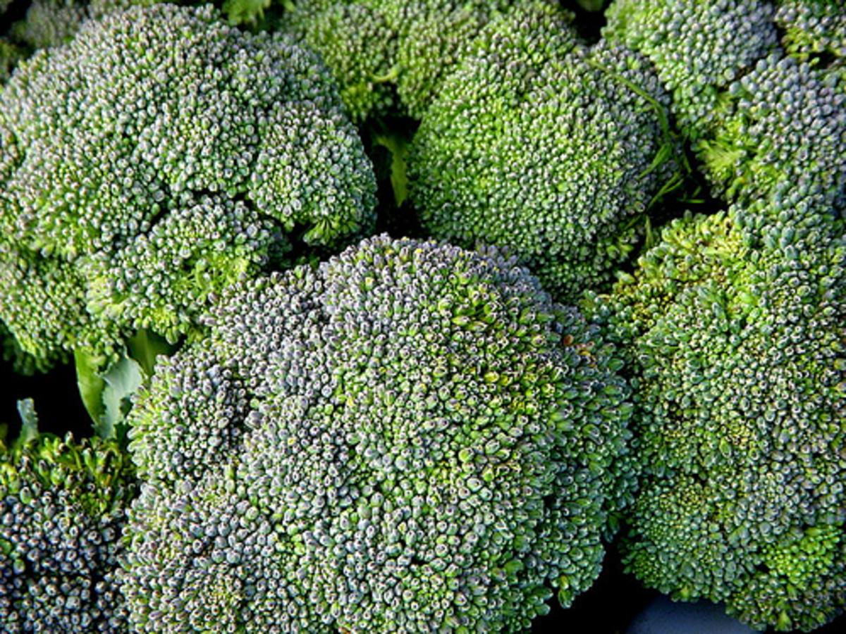 Broccoli, a source of beta carotene and lutein